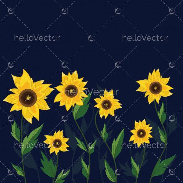 Sunflower on dark background - Vector illustration