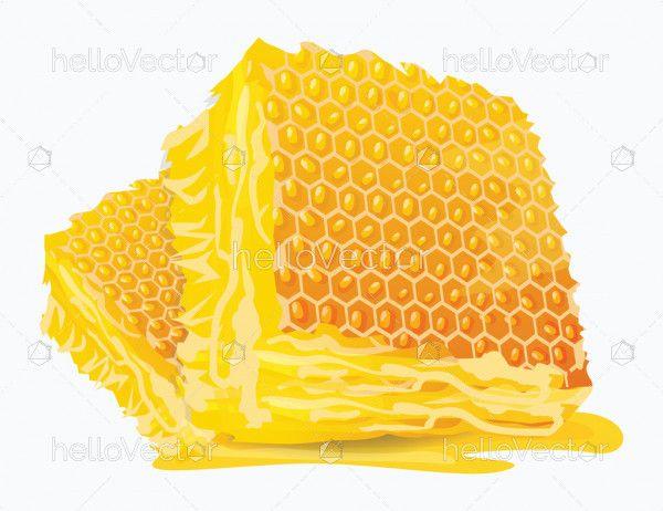 Fresh Honeycomb Slices
