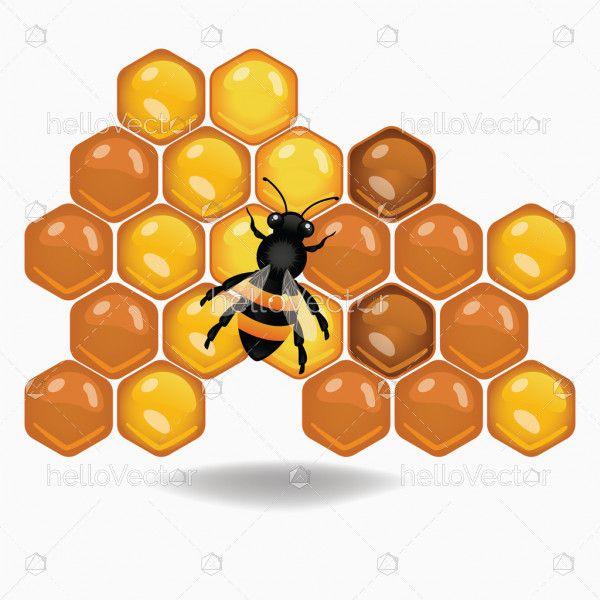 Bee on honeycombs illustration